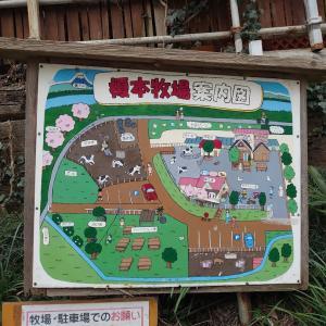 上尾市 榎本牧場3回目の訪問。