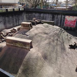宇都宮市 宇都宮動物園に3回目の訪問 2 動物との触れ合いなど。