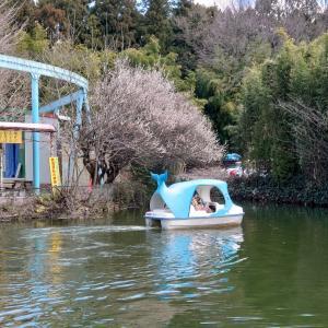 宇都宮市 宇都宮動物園に3回目の訪問 3 昼食と遊園地。