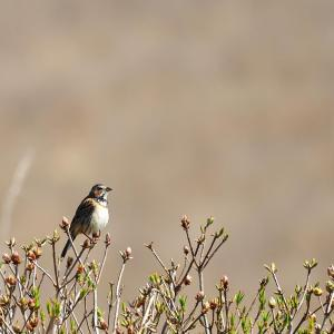 信州での鳥