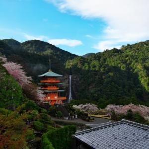 2021桜⑤ 那智の滝と桜