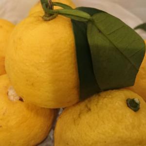 冬至の可愛い柚子