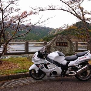 稲村ダムの桜