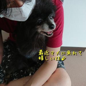 ノワ、病院 withタヌキ