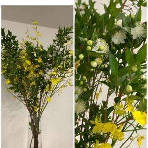 今週のお花とスタッフのご紹介♪