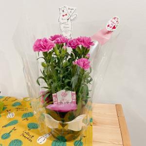 今週のお花(母の日バージョン)と今月の本