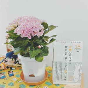 今週のお花と今月の本