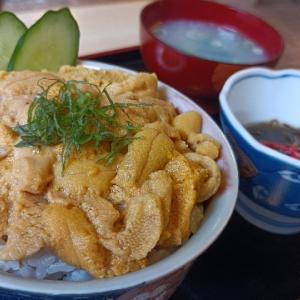 夫婦で日本一周 日本で一番コスパが良いウニ丼