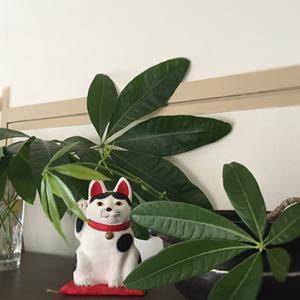 GREENのあるお部屋【手入れしないと植物も人間もストレス】