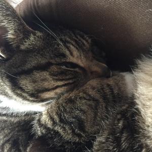 弾き疲れた時は猫抱っこ。充電器ですわ。