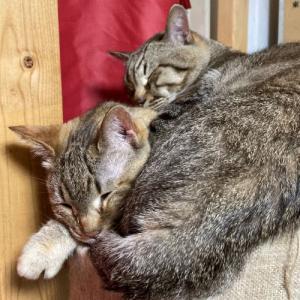 猫のおかげ?朝活時間