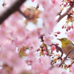 【ワークショップ・桜ハッピーカフェ】幸せで美しく豊かな大人女性
