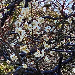 月と太陽の暦(こよみ)太陰太陽暦〜日本の季節ある暮らし