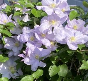 初夏の彩り〜母の日に花咲く
