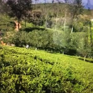スリランカの茶園へ