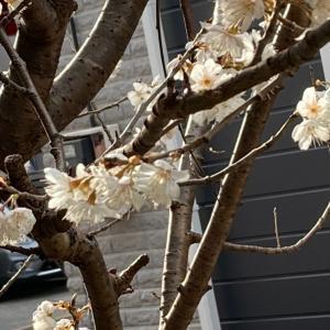 桜って…(^^)