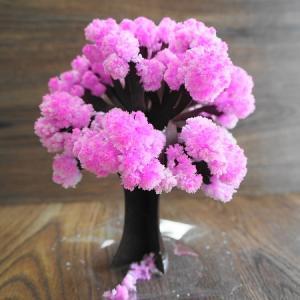 「Magic桜」12時間で咲く桜で【おうち花見】を楽しもう!