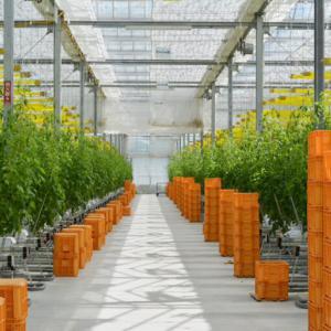 未来の農業を見つめる「マキシマファーム」大規模施設園芸