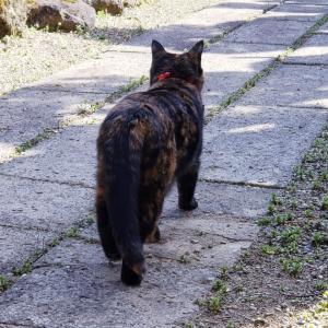 最近の地震と猫のミミ