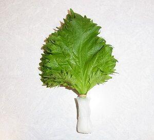 【767UP】野菜の保存-大葉とキノコ