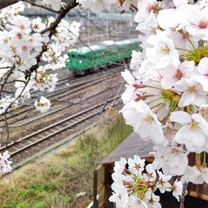 さくら色の京都駅
