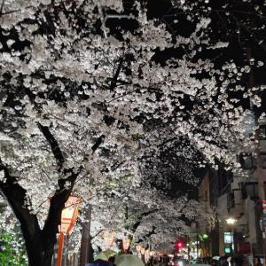 白酒呑みながら花見。