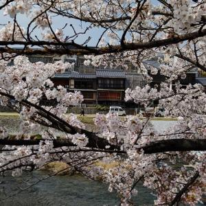 ぶらぶら、桜めぐり。