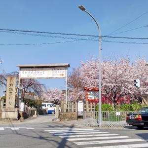 六孫王神社と桜