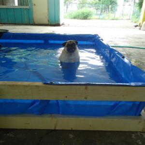 ワンちゃんのプール作ちゃいました。