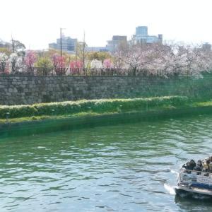 大阪城桃園、まだ満開。