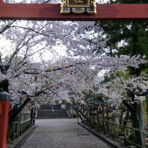 平成最後、奈良公園の桜(5)。