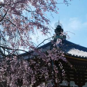 奈良公園、残り桜と新緑(1)。