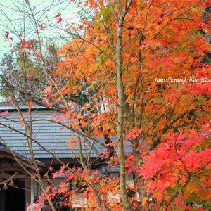 正寿院 紅葉