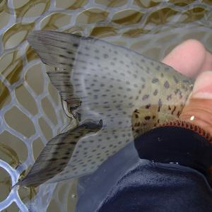 FISH ON王禅寺