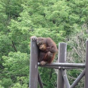 休園中動物園の森の人は
