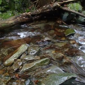 初秋の秋川