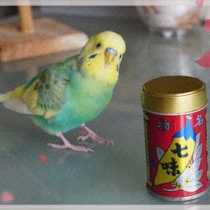 ぴなちゃんと礒五郎