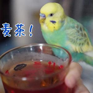 麦茶大好きぴなるーりん