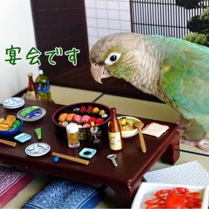 りんちゃんの一鳥(ひとり)宴会