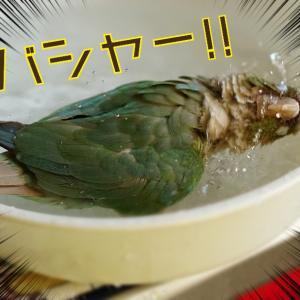水浴びりんちゃん