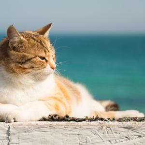 猫 のんびり