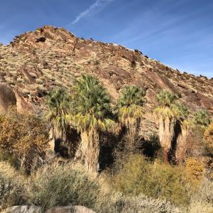 Andreas Canyon ループトレイル後半
