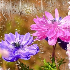 @japan_aps_flower