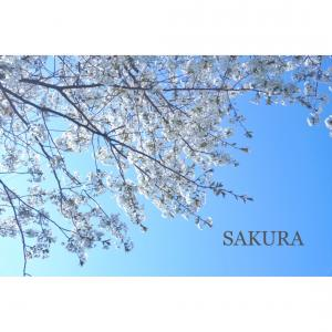 今この瞬間も大切に楽しみながら 思いっきり春を感じよう!