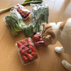 【美味しいお野菜到着】