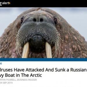 ロシア人と動物たちの触れ合い(2)