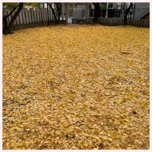 黄色い絨毯の正体は!?