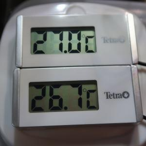 【冬の発送・保温実験してみました 】60サイズ発泡ケースで保温実験【カイロ1個と2個の比較、水温を監視】
