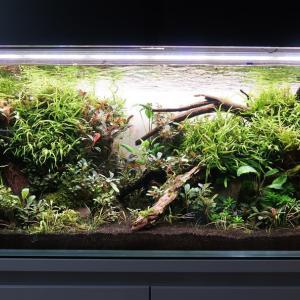 120センチ水草水槽の全景公開×2本