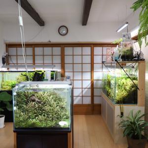 120cm水草水槽が4本ある部屋【YouTube更新】